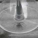 Handige Spinnenvanger