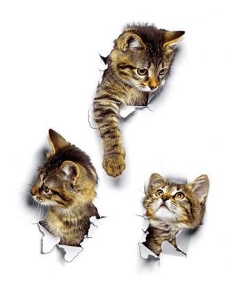 3d muurstickers kat